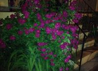 28_bloom.jpg